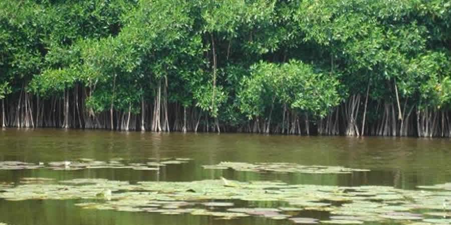 La afectación a los ecosistemas está en una fase crítica