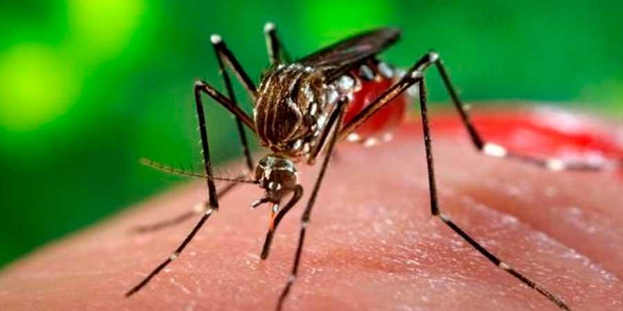 Prevé OMS propagación del zika por toda América