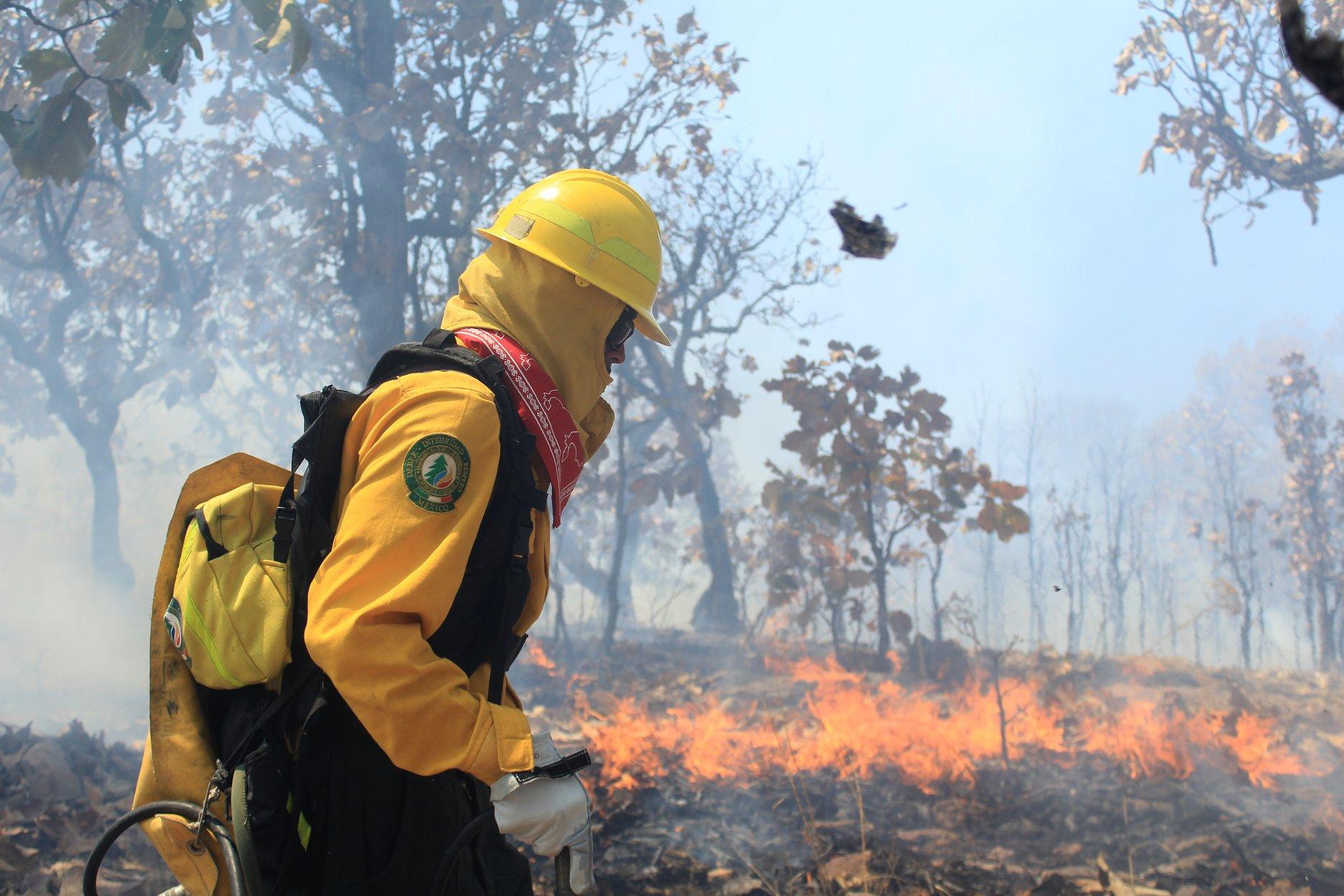 En Chiapas, incendios forestales arrasan con 18,716.98 hectáreas durante el 2019