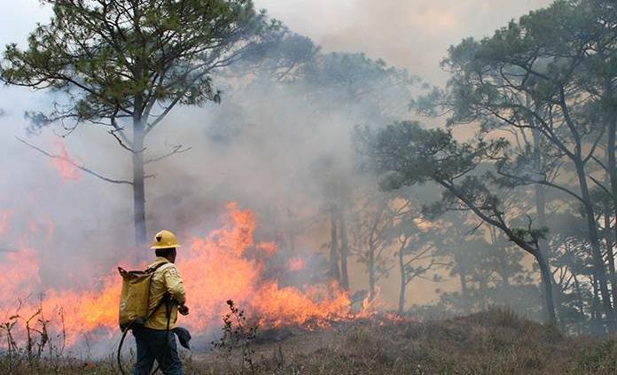 Hasta el momento se han registrado 315 Incendios Forestales en Chiapas