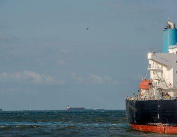 Piratas realizan pesca de arrastre y exploración en mares mexicanos: estudios revelan el impacto negativo que generan en la biodiversidad
