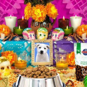 Día de Muertos para mascotas: ¿cuándo vienen los animales a casa?